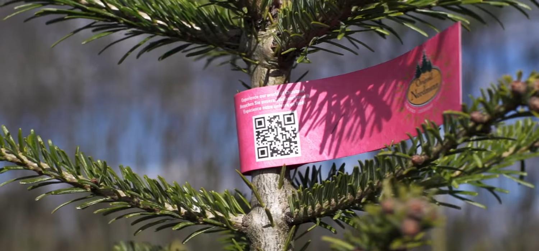 Kerstboom kopen in Oude Wetering - Nordmann Excellent kerstbomen
